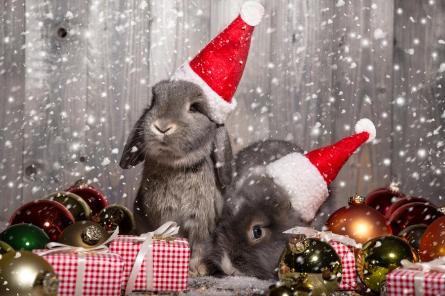 Frohe Weihnachten & einen guten Rutsch ins neue Jahr ...